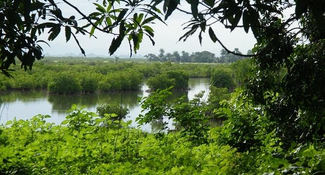 Mangrove - Sénégal